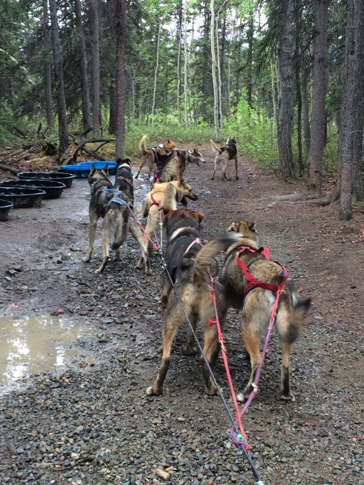 After a quick water break, they were ready to finish the trail.